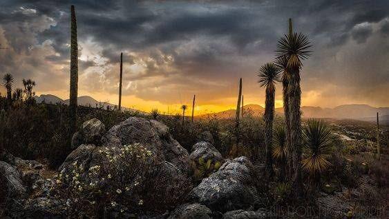 El Valle de Tehuacán-Cuicatlán en Puebla es patrimonio de la humanidad