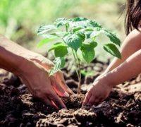 Plantar árboles no es suficiente para limpiar el planeta
