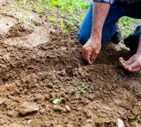 Los megaproyectos buscan imponerse en territorios rurales e indígenas, advierten activistas